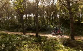 Honda X-ADV  2017 Bild 17 Durch den Wald geht's auch, man sollte aber auf Schlaglöcher, Wurzeln und allzu schlechte Wege achten, denn die 154/150 mm Federweg stoßen bald an ihre Grenzen.